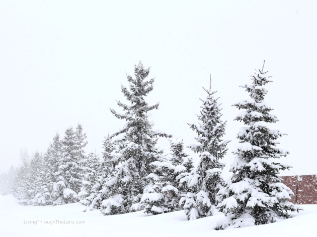 First day of Spring in Edmonton and a huge snowstorm hits. Snow blankets the city. Beautiful, untouched snow. Calming and relaxing.